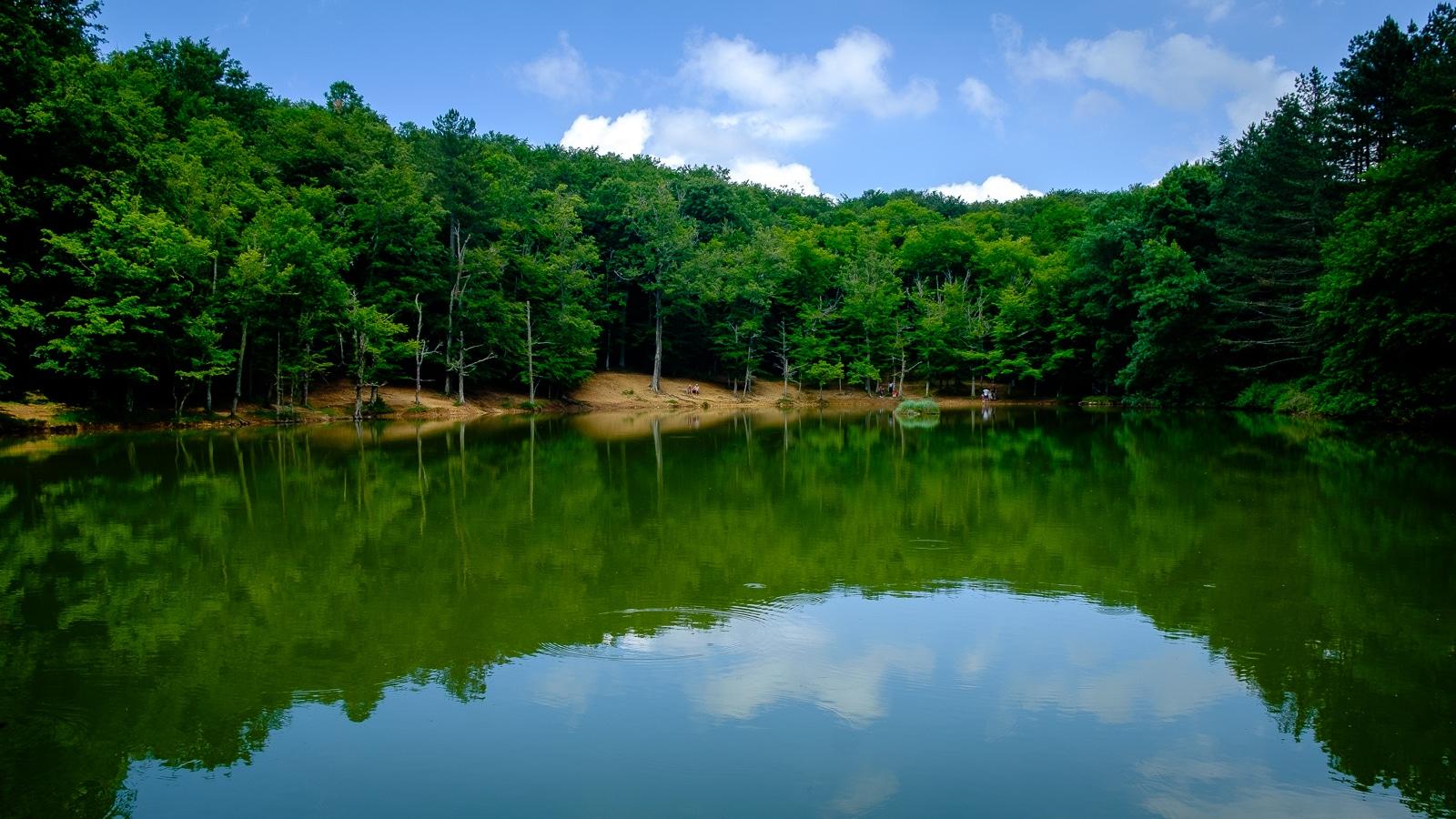 Il laghetto della foresta umbra for Il laghetto